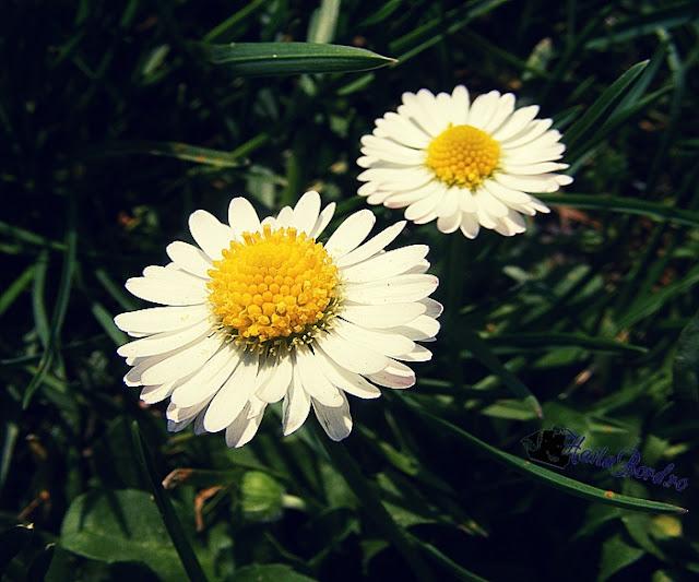 flori parcul botanic timisoara