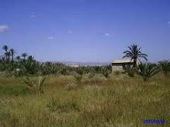 Campo de concentración de Albatera