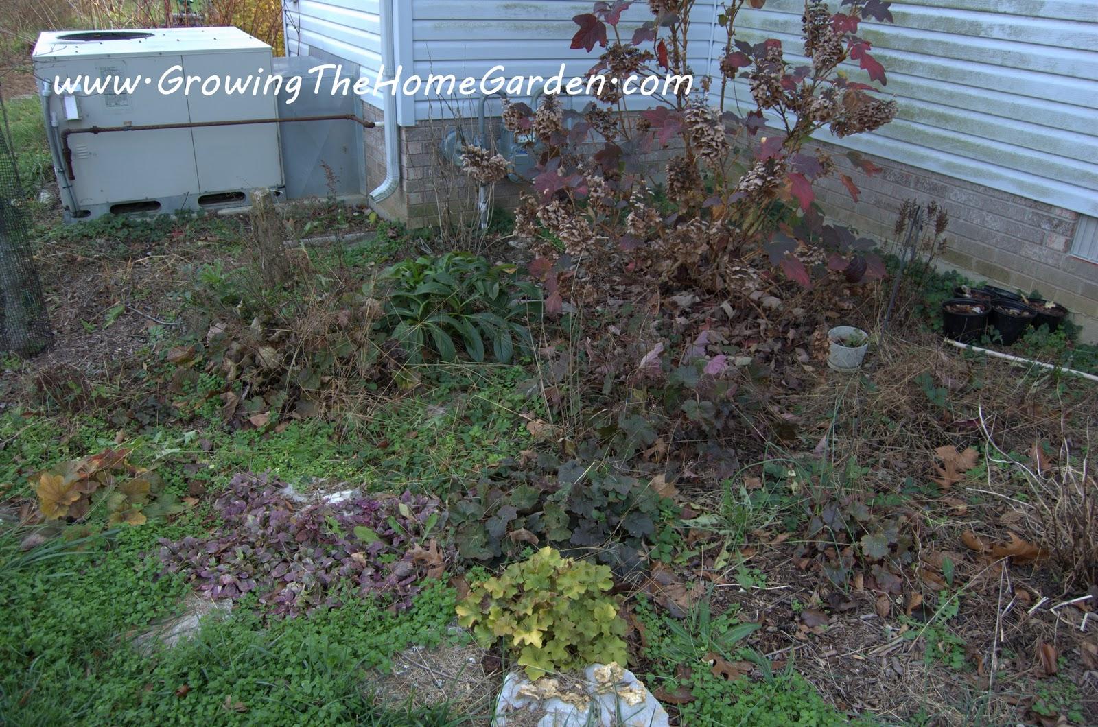 shooting around the garden growing the home garden