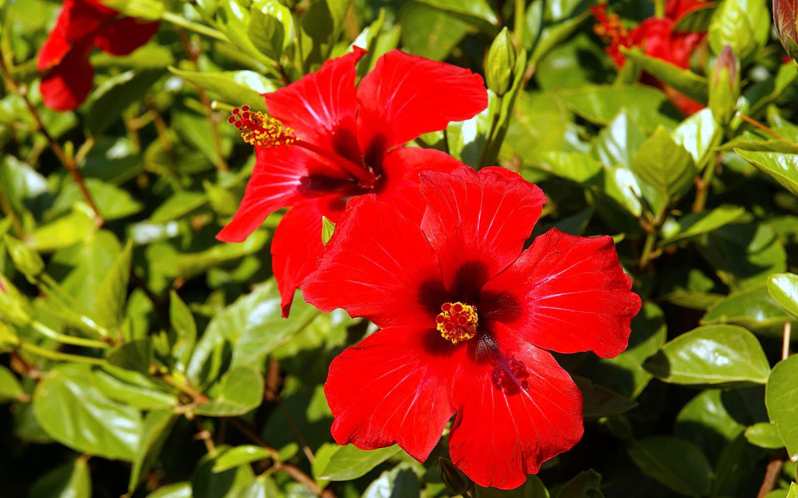 Цветок с бело-красными цветами фото и названия