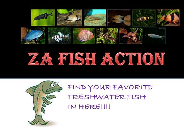 ZA FISH ACTION