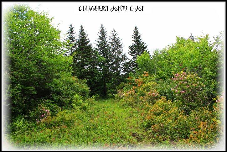 Cumberland Gal