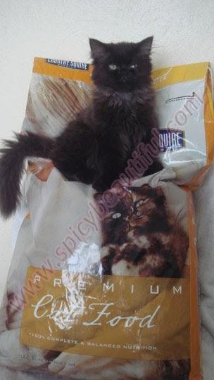Friskies Canned Cat Food Kills Cats