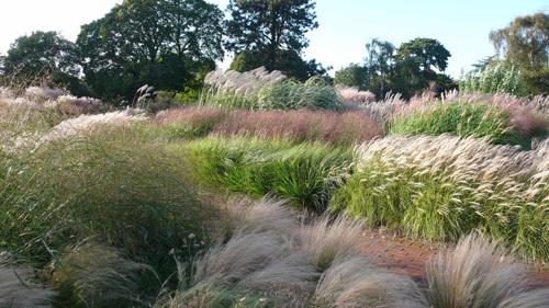 Il giardino sfumato un giardino di piume for Piante graminacee ornamentali