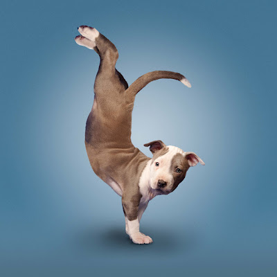 Hilarious Yoga Dogs Calendar Seen On www.coolpicturegallery.us