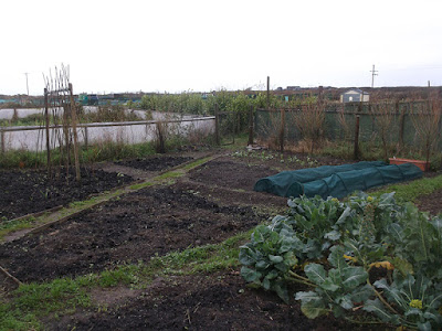 St Ives Cornwall Allotment - November
