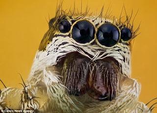 foto gambar serangga