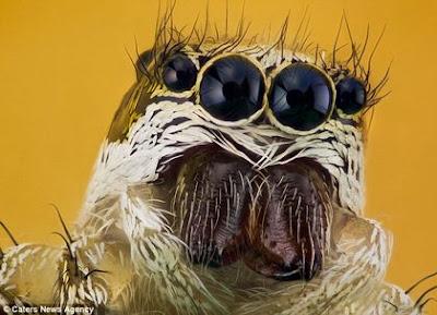 [imagetag] foto gambar serangga