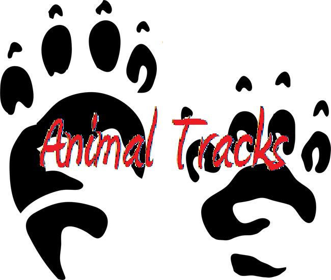 Identify Dog Breeds Worksheet To Download Identify Dog Breeds   Dog ...
