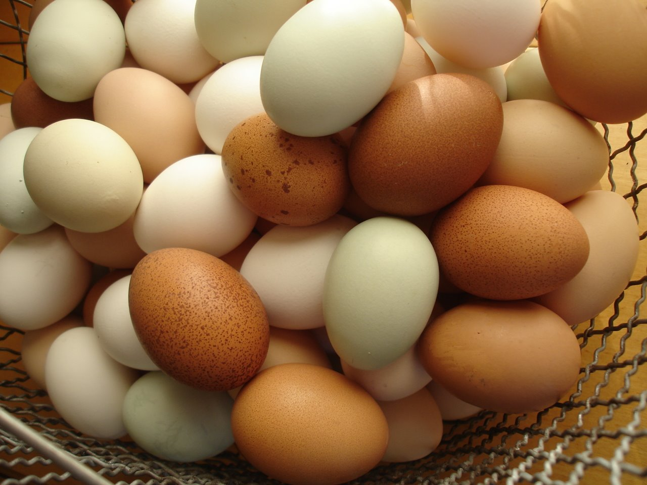 Image result for organic pastured eggs