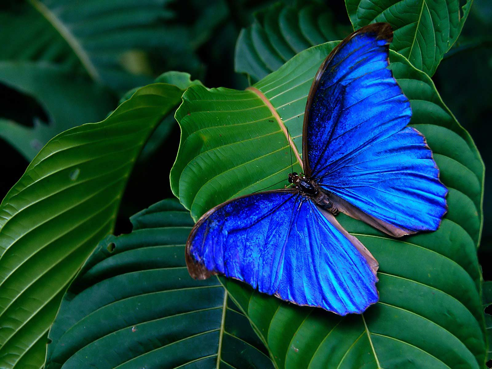 wallpapers background: butterfly hd wallpaper |butterfly 3d wallpapers
