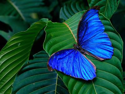 http://4.bp.blogspot.com/-iT9vyjKposk/Tlv3H-_kBWI/AAAAAAAAAgE/Fn4LXFVPnHM/s400/Tropics_butterfly.jpg