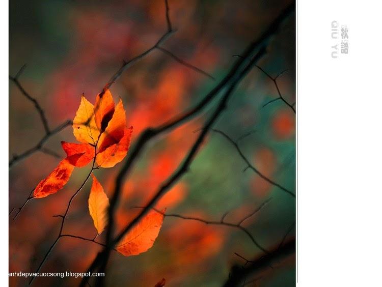 Chiếc lá mùa thu 2