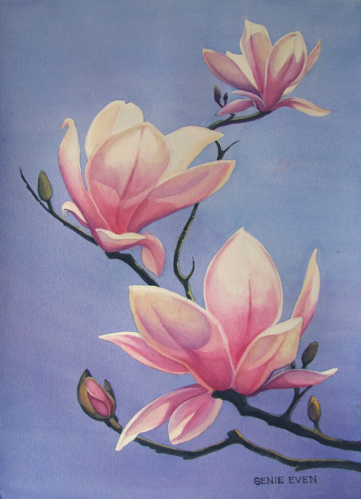 magnolia painting - photo #7