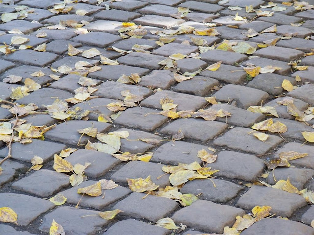 Golden Leaves on a Cobblestone, Lviv, Western Ukraine, October