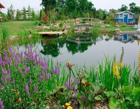 Gypsy yaya natural swimming pools - Swimming pools made to look like ponds ...