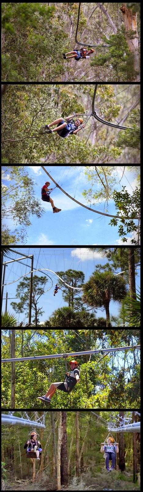 Treetop Crazy Rider: Roller Coaster Yang Digantung Pada Pohon | liataja.com