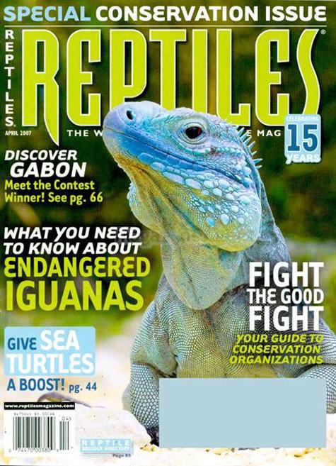 Reptiles Iguana Cover