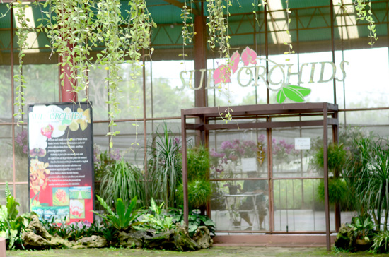DAY TOUR AT SUL ORCHIDS DAVAO