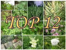 2013. sezona augu pasaulē ar top 12