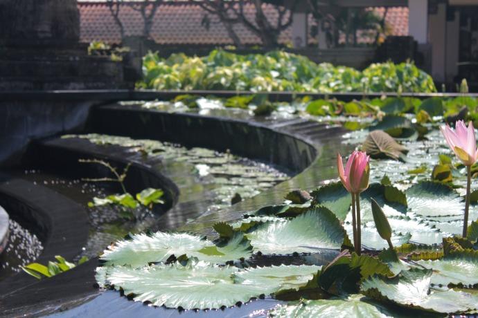 Lotus Flower Bali