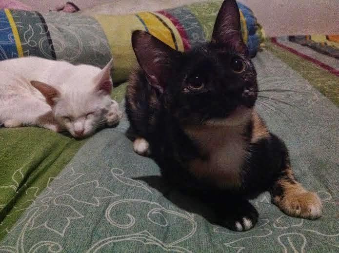 Cleo si kucing hitam