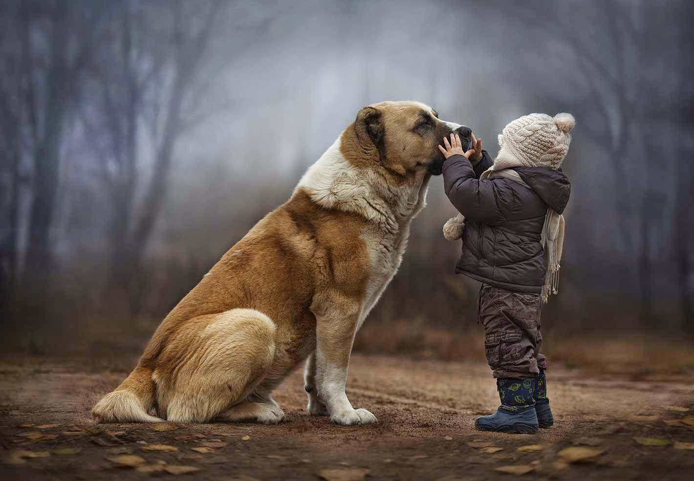 Amazing Child & Dog Love Wallpaper