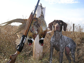hunting dog in field
