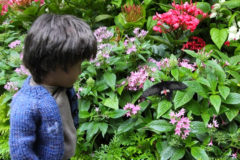 http://holidayswithhenry.blogspot.co.uk/2015/04/the-butterfly-garden-in-changi-airport.html