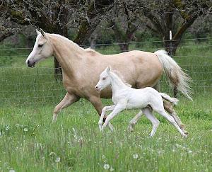 I Love Horses!!