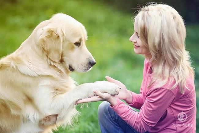 Adestre seu cão: o poder do reforço positivo