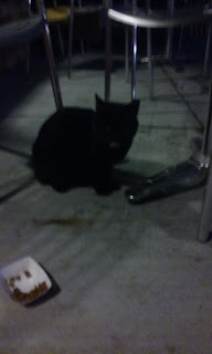 black cat underneath table