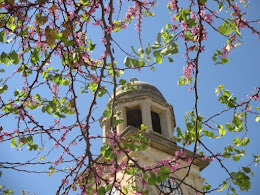 Redbud Tree and Clocktower, Chania, Crete, March 2016