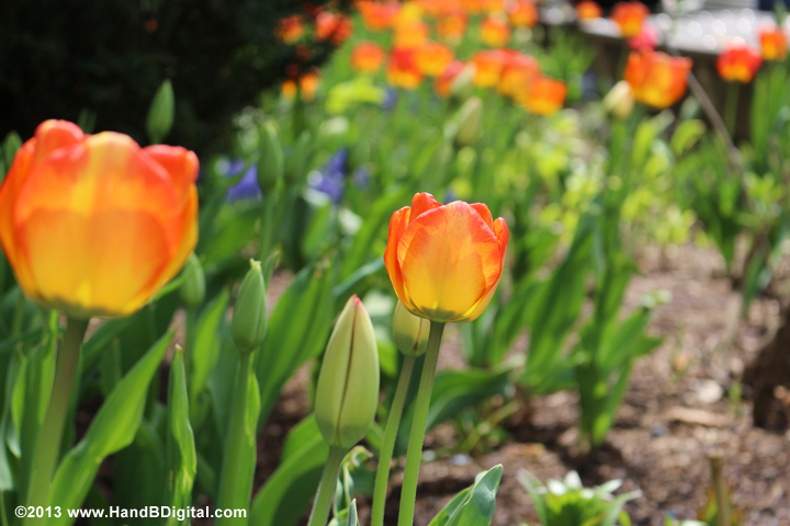 Canon T5i Sample Images   H and B Digital - Cameras, Electronics