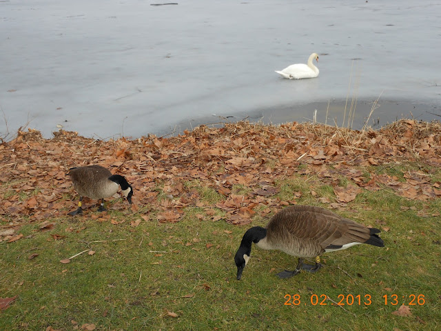 Canada Goose Accesorios Frontera popular