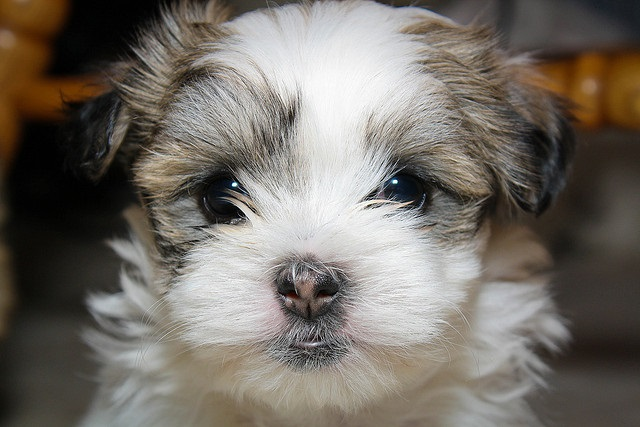 pictures of really cute puppies