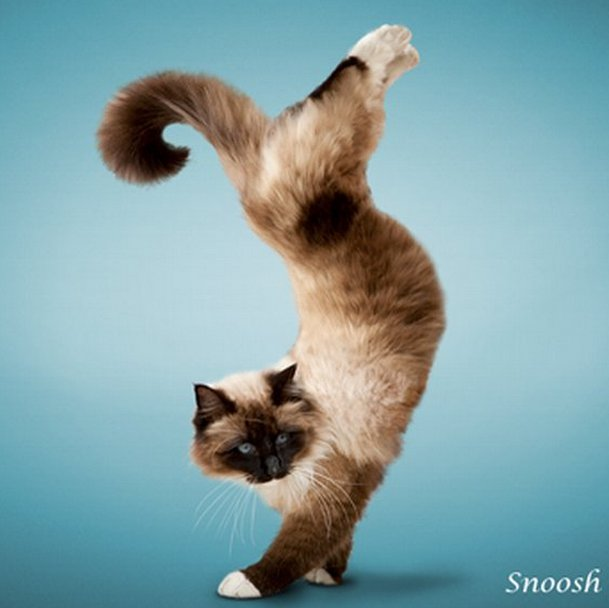 Koleksi Gambar Kucing Yg Cerdik Pihh Biochem