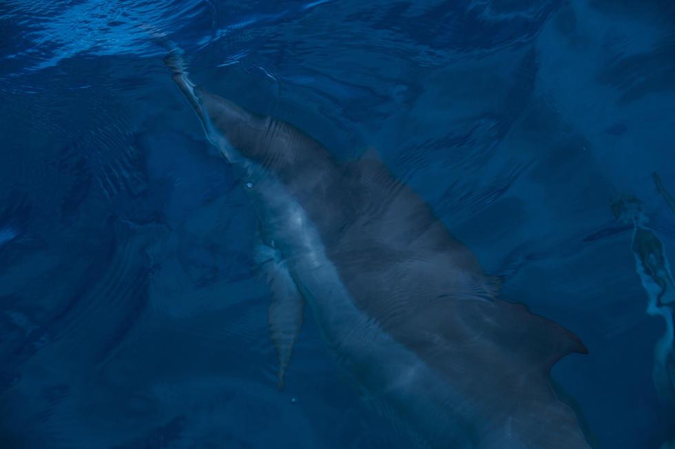 24 Dolphins Fiji Womens Pro Fotos WSL  Stephen Robertson