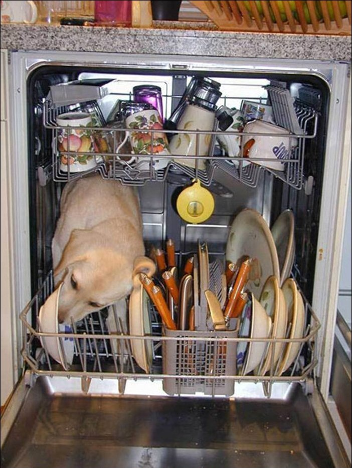 Ever wonder how a dishwasher works pic amazing creatures for Cooking fish in dishwasher