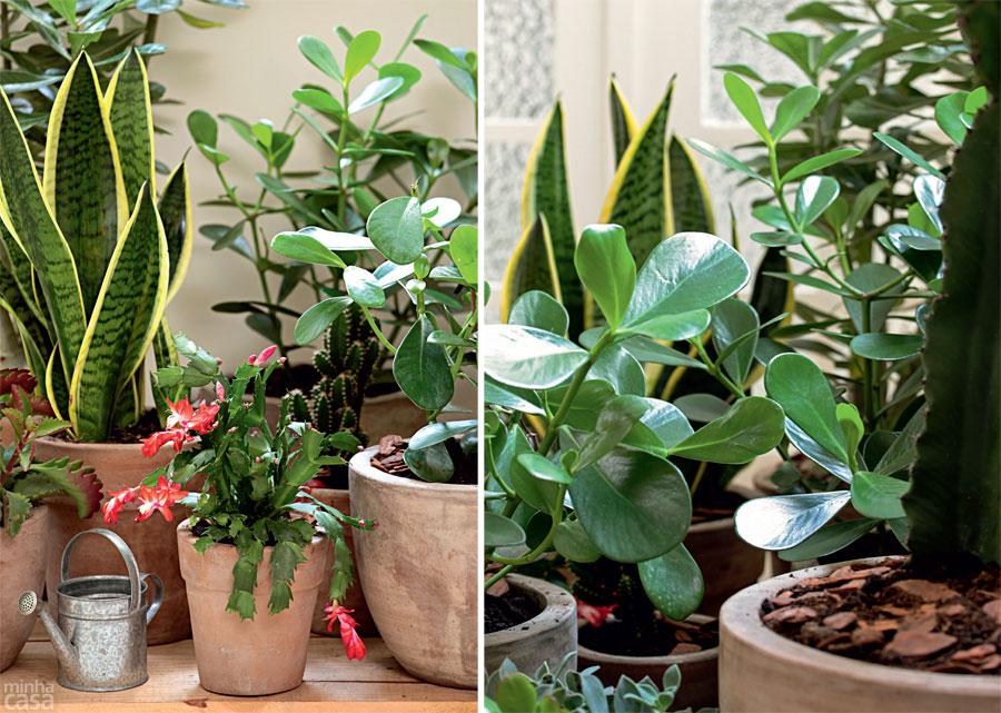 plantas para jardim resistentes ao solcacos de telha para drenagem em