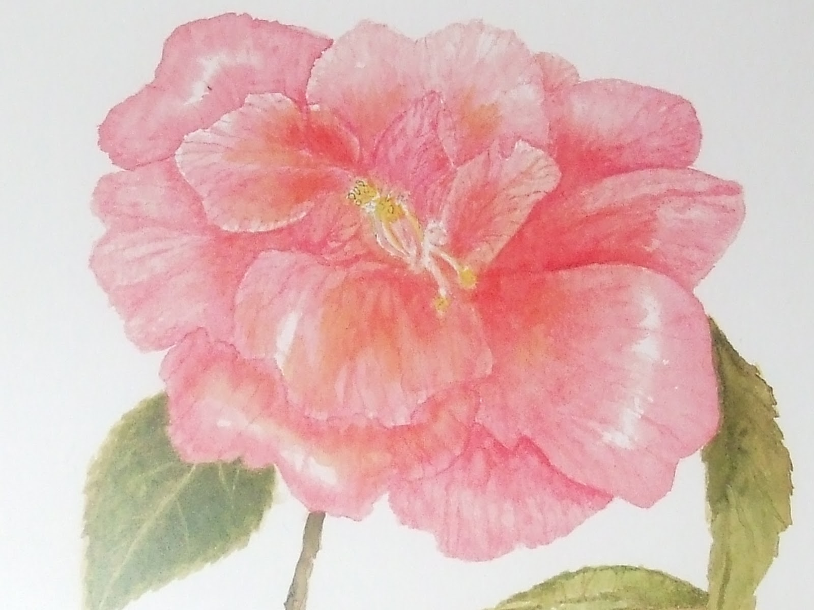 Pearlsnponderings camellias and happy birthday liz a close up camera shot of the flower that liz painted this is from a print version of the original water color izmirmasajfo