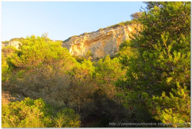 al otro lado roca y pino