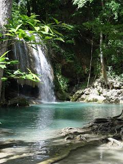 photo keindahan alam hutan