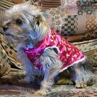 ropa de perro para bodas