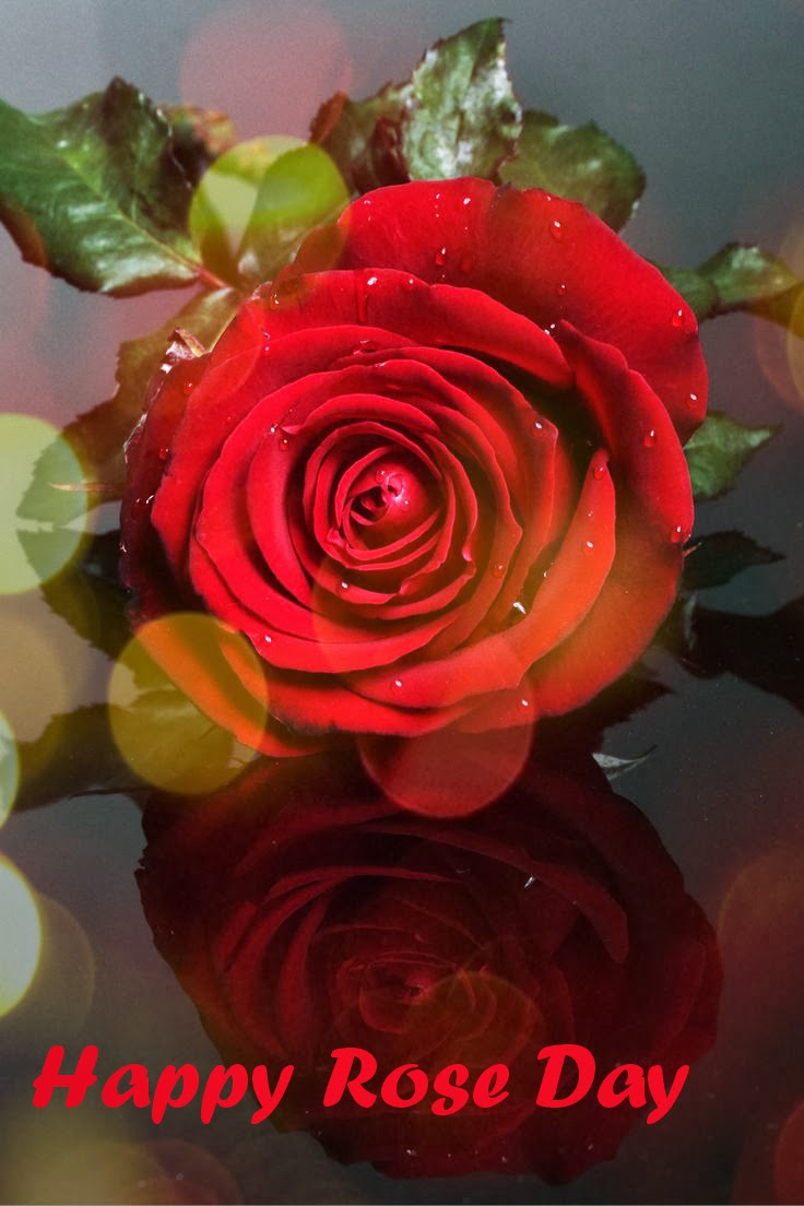 Rose Day 2016 Wallpapersquotes And Greetings Card