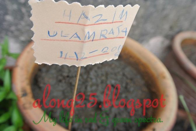 blog along25, along25, berkebun, gardening, aktiviti tabika, ulam raja, benih ulam raja, carbon footprint