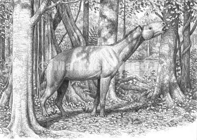 palaeotheridae Palaeotherium