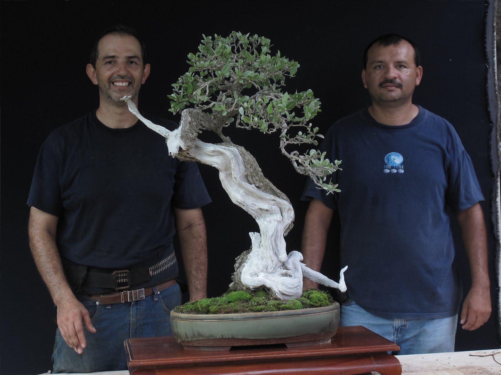 Con el Master Enrique Castaño y uno de sus famosos bonsais 5/10/2011