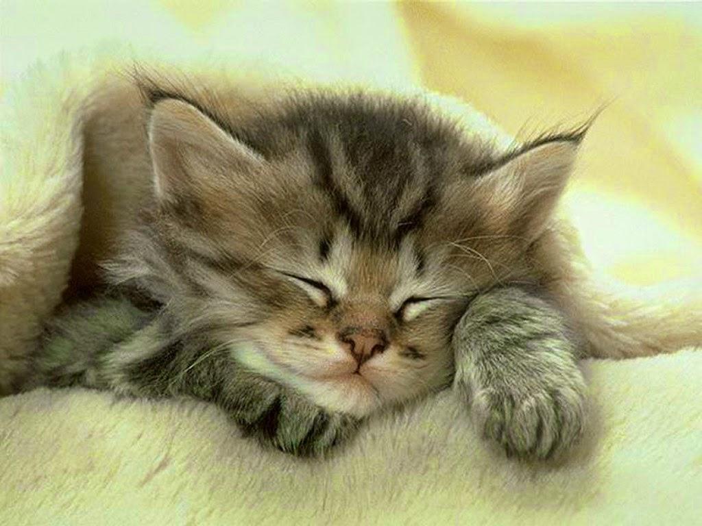 Sleeping cute little cat