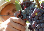 Italy Top Wine Producer in the World